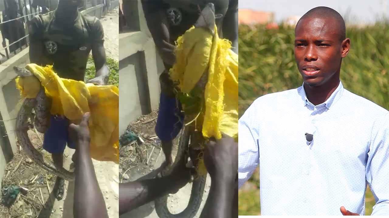 Vidéo – Pikine – Un boa attrapé, les autres guettés dans les bassins de rétention