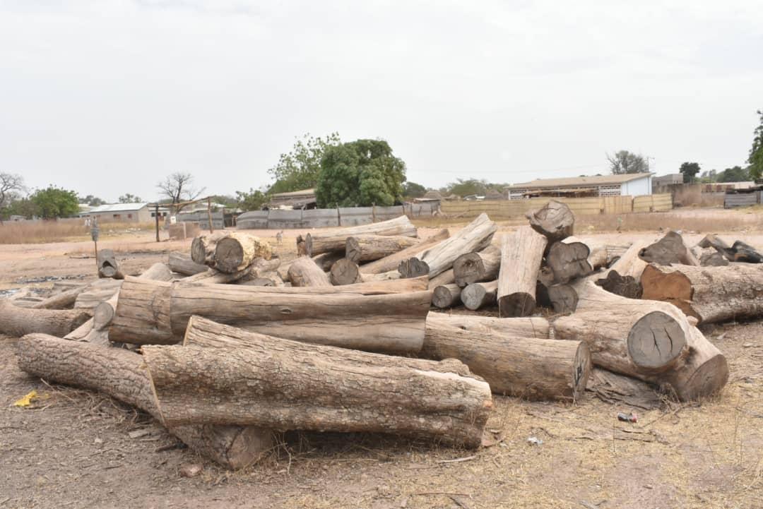 """La Gambie """"coupe"""" 117 milliards F CFA au Sénégal – Le coeur de chaque forestier saigne et…"""