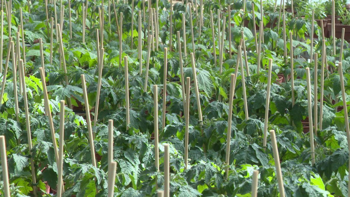 """Confinement – Les horticulteurs """"fanent"""" à cause du coronavirus"""