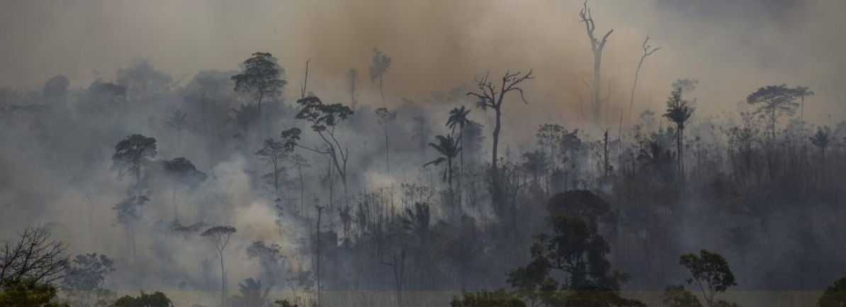 Biodiversité – Plus de 200 défenseurs de l'environnement tués en 2019