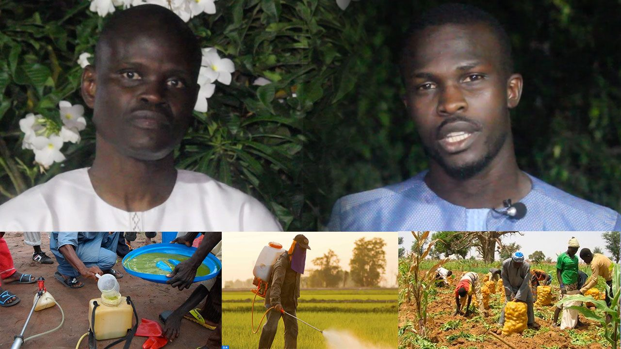 """L'Environnement en question – Dr Macoumba Diouf: """"l'avenir du monde, c'est l'agriculture, donc…"""""""