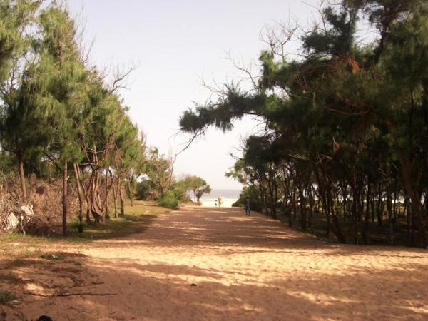 Sénégal – Ces arbres qui sauvent la planète
