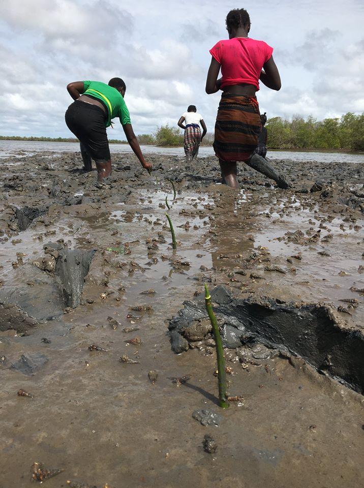 Journée de la Mangrove – 300.000 palétuviers plantés en Casamance et le Sine Saloum