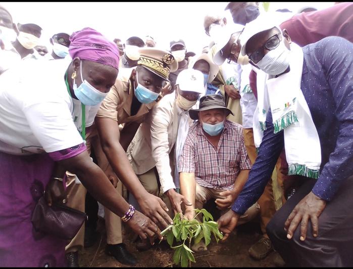 Fête du baobab –  Haïdar El Ali à Dialambéré : une foire où des plantes s'échangeront