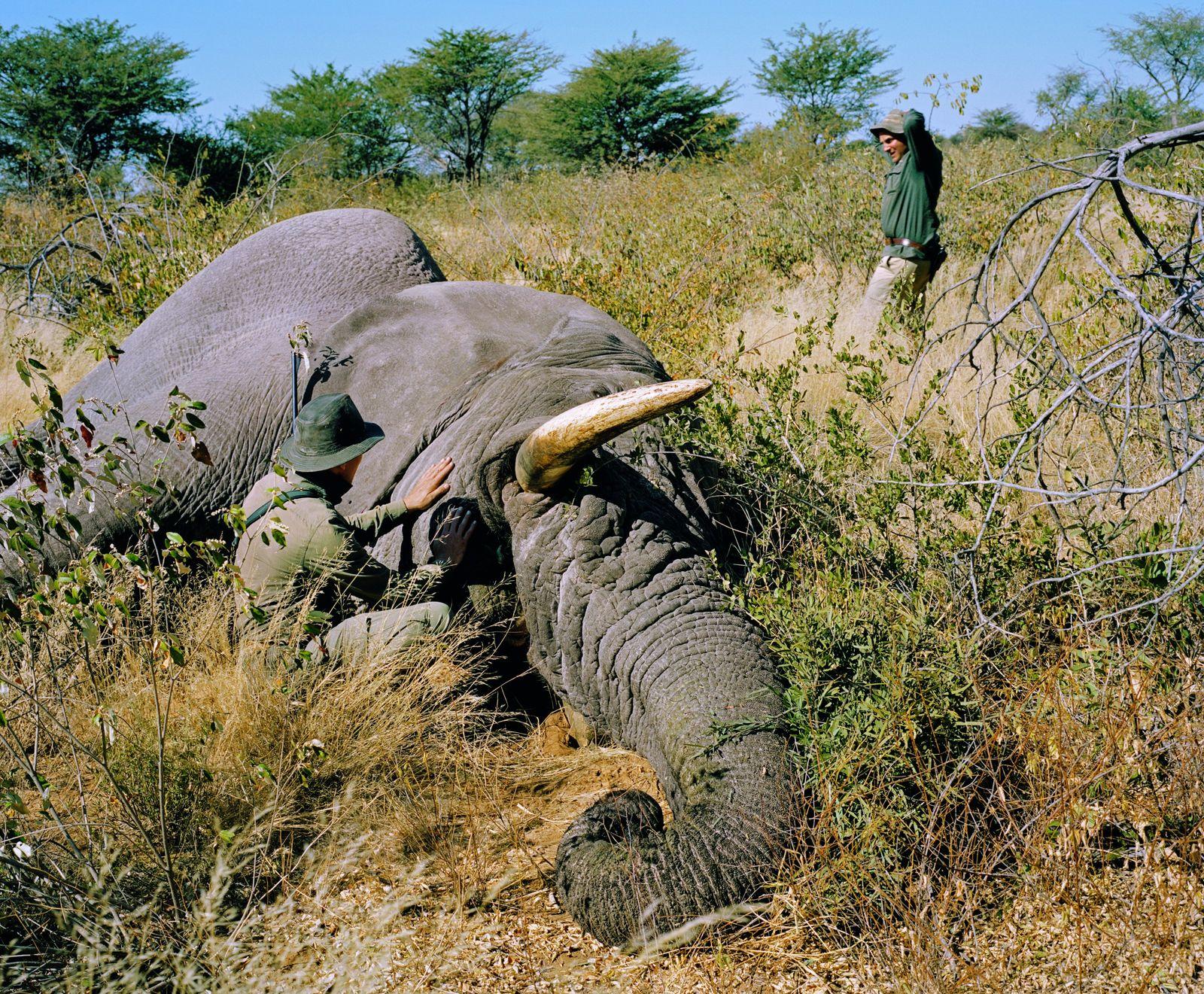 Nambie – Un américain paye 70.000 euros pour pouvoir tuer un éléphant