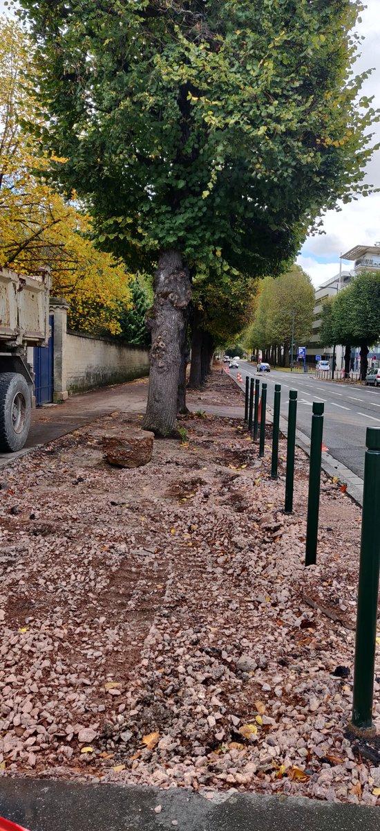 La ville de Caen retire 1 000 m2 de bitume au pied des arbres pour reverdir ses trottoirs