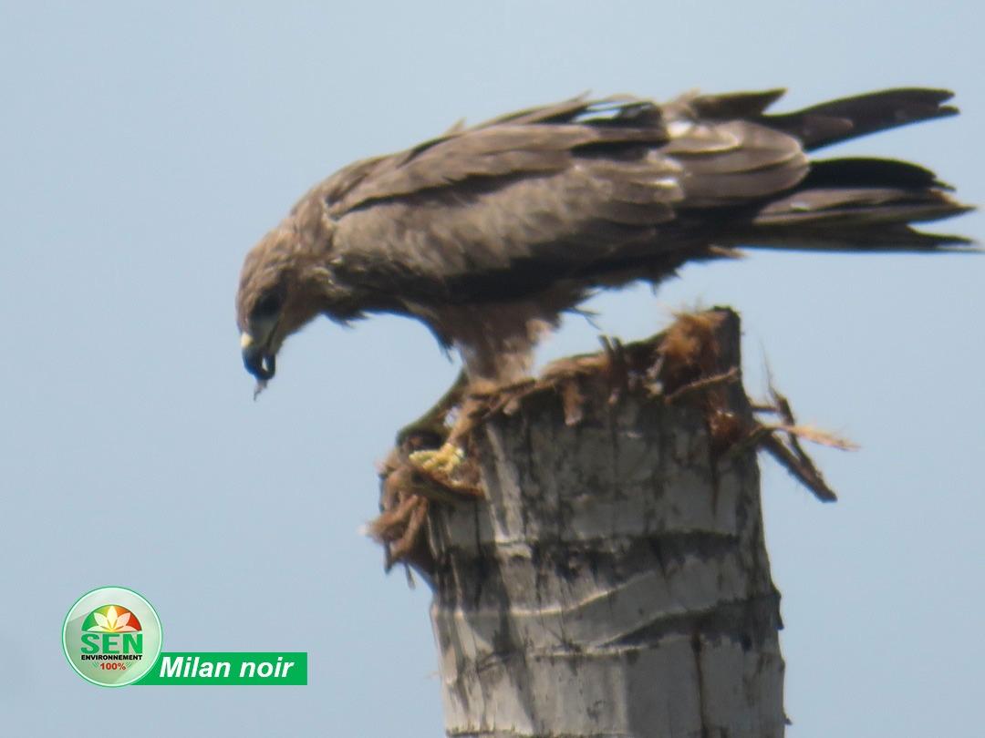 En images – Journée Mondiale des Oiseaux migrateurs