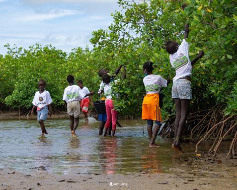 Palmarin – L'éducation environnementale et le reboisement, une réalité avec Nébéday