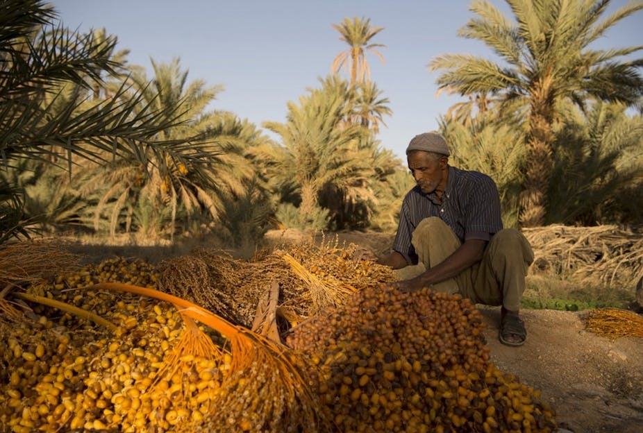 Désertification – Les oasis du Sahara, les derniers remparts menacés