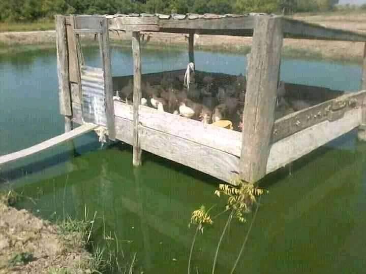 Découverte – Quand l'aviculture permet la pisciculture