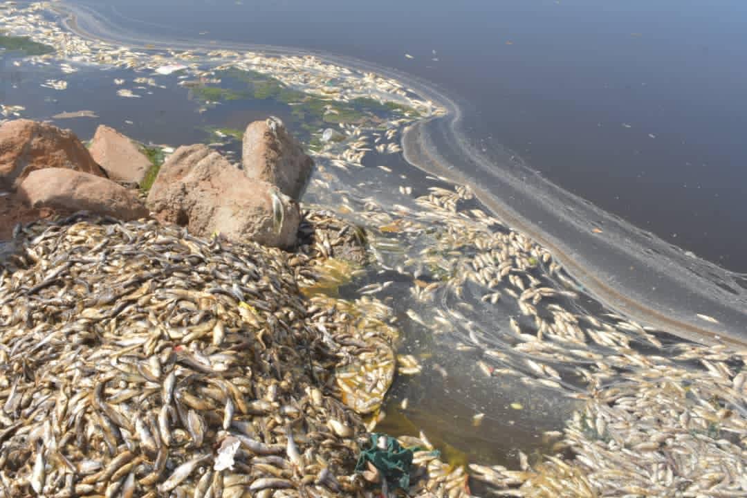 Mortalité de poissons à Mbao: la DEEC s'est rendue sur les lieux