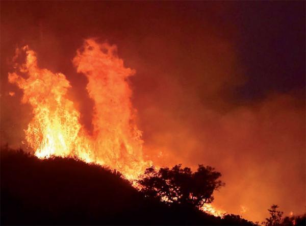 Sedhiou/14.259 hectares de forêts brûlés: le péril vert au rouge