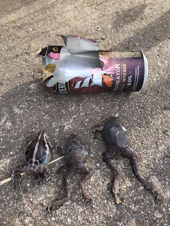 Environnement – Les déchets sauvages tuent la faune