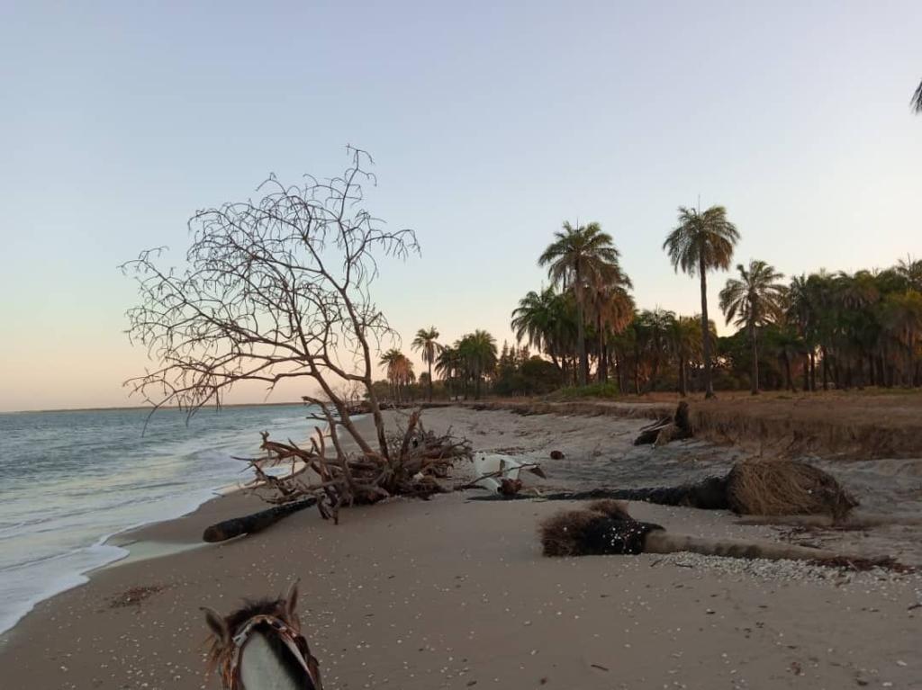 Iles du Saloum – Dionwar redoute l'avancée de la mer (images)