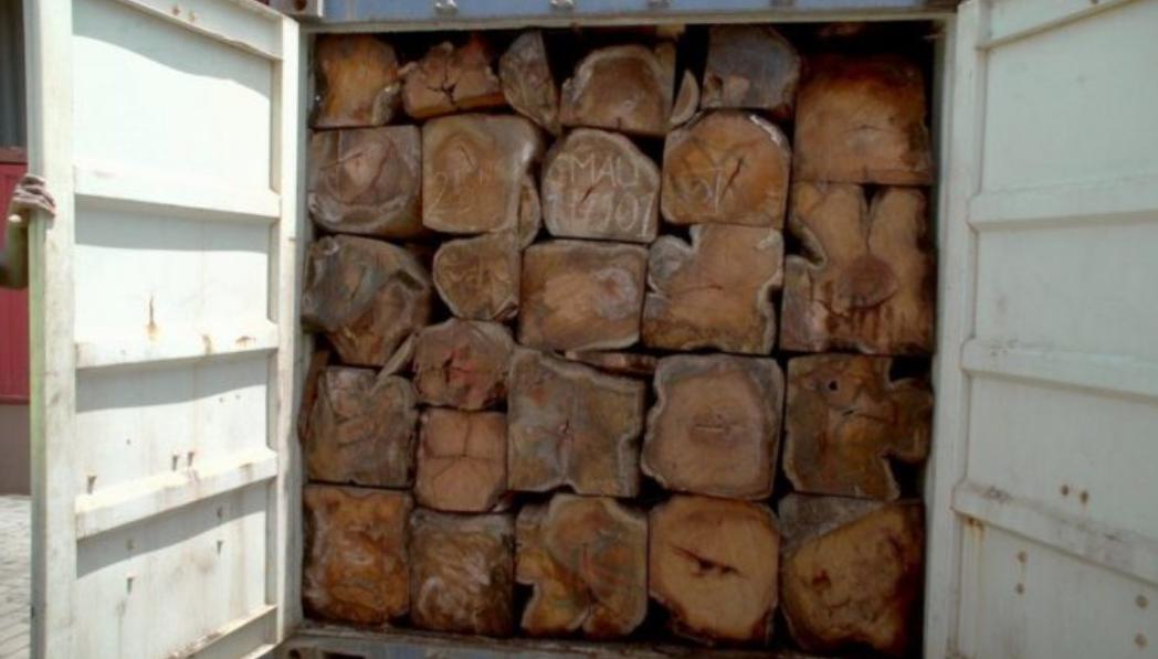 Gambie – Trafic de bois de la Casamance: 22 containers saisis, un suspect arrêté