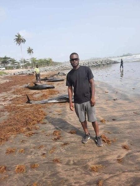 Contamination chimique – 60 dauphins morts, emportés par des pêcheurs véreux pour la revente