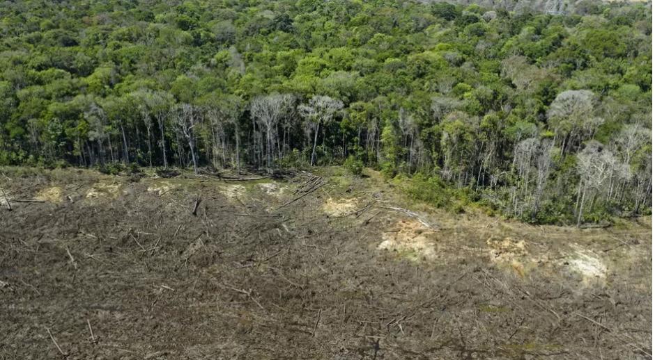 Brésil : la forêt amazonienne émet désormais plus de carbone qu'elle n'en absorbe