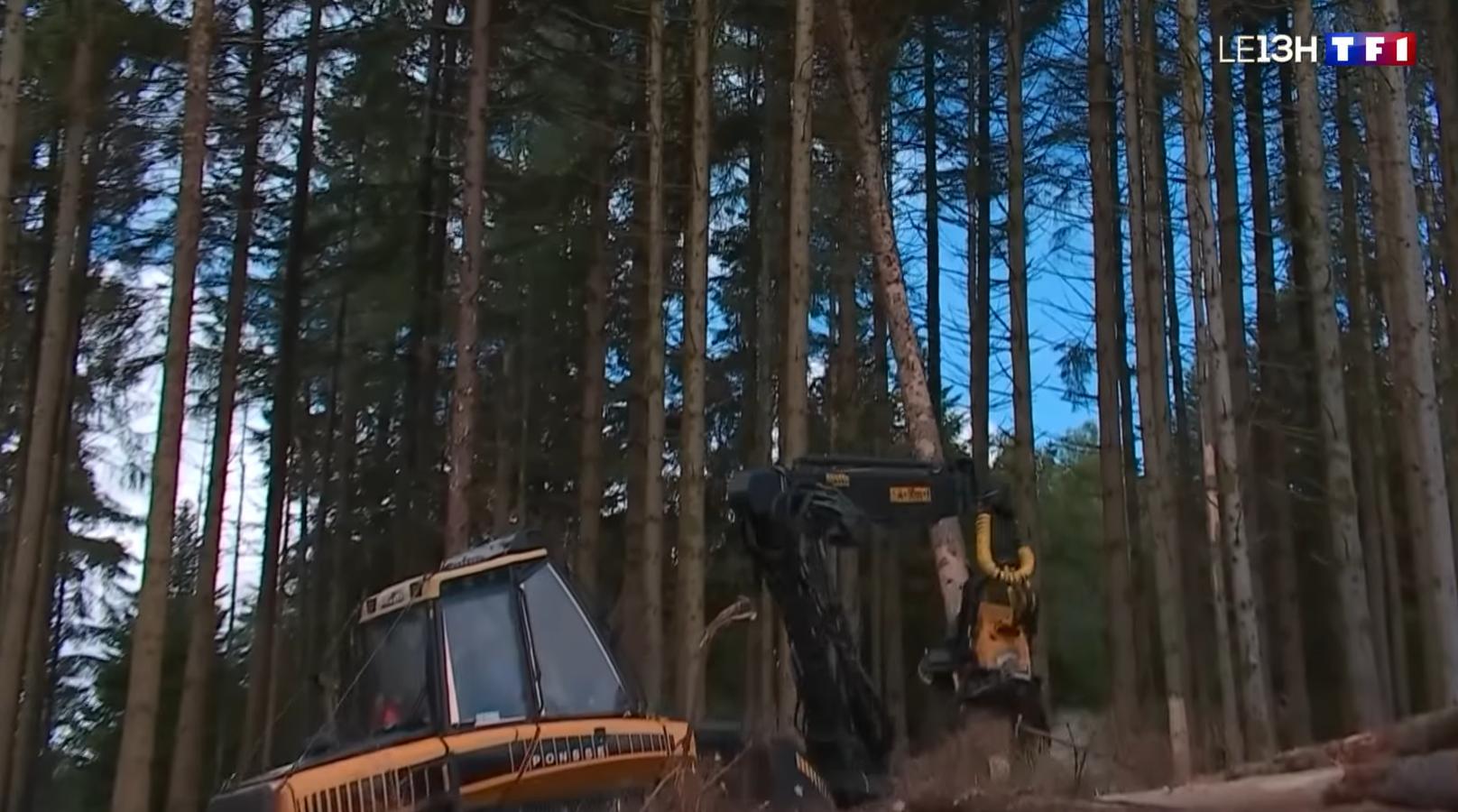 Reportage: Les scolytes ravagent les forêts