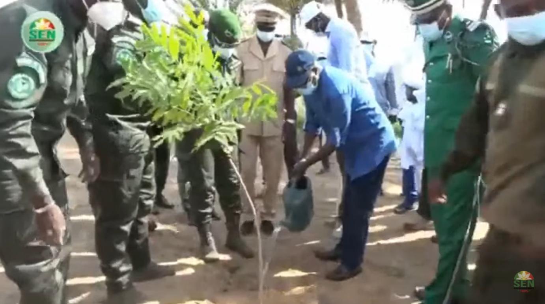 Journée de l'arbre: Créer des emplois verts et décents, c'est reconstituer les bases productives et le couvert végétal