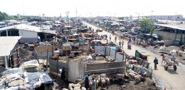 [Focus] Seras de Pikine : Insalubrité, pollution sonore, le calvaire des populations de la cité Darou Salam